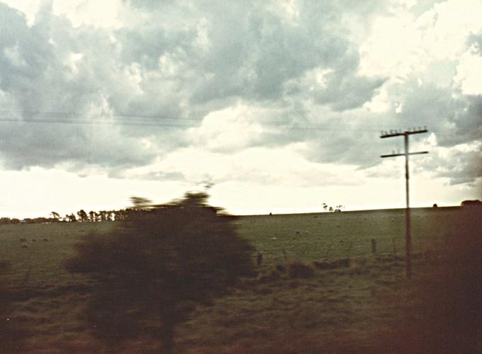 アデレイド・南オーストラリア。View of bush.