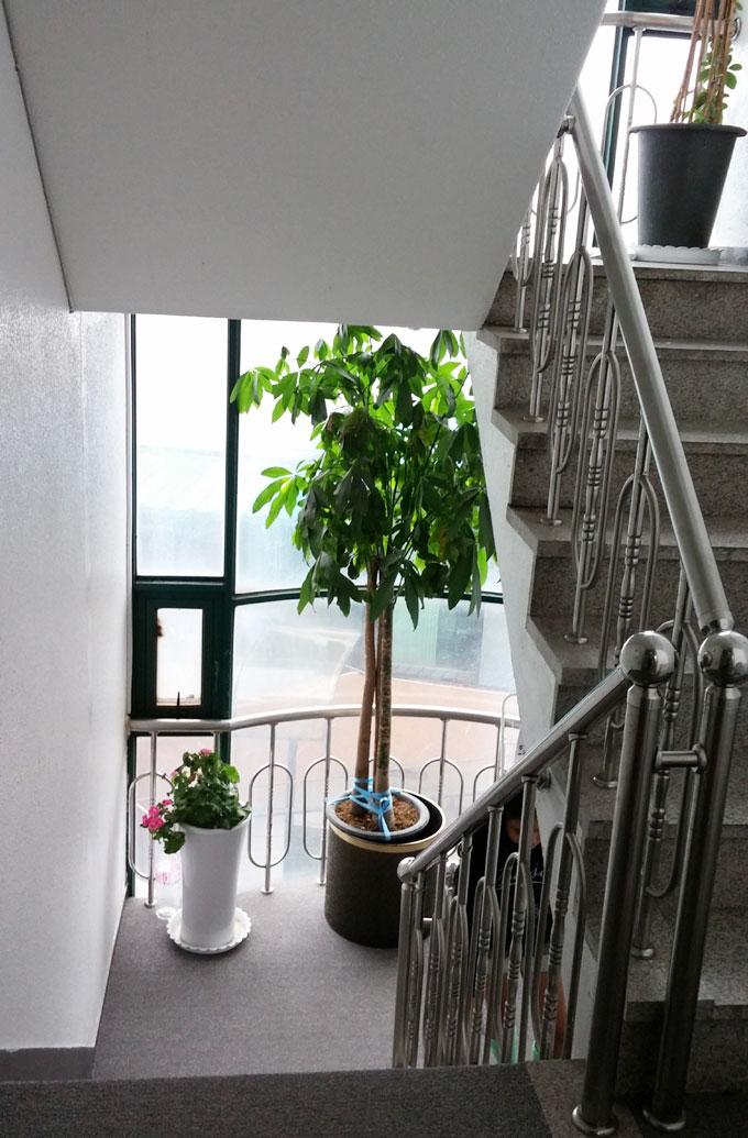 韓国・ソウル。ソウル。路面側ガラス張りの階段 - iハウス(i house.)