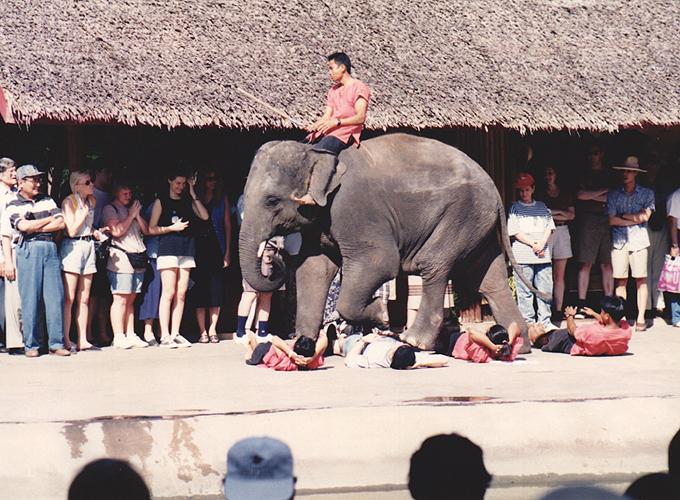 タイ王国・バンコク。elephant ride in Ayutthaya.