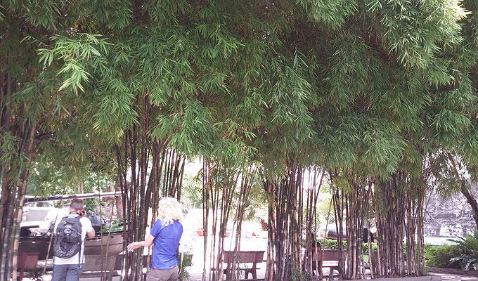 ベトナム・ホーチミン市。戦争証跡博物館(War Remnants Museum.)カフェの向かいの竹藪。