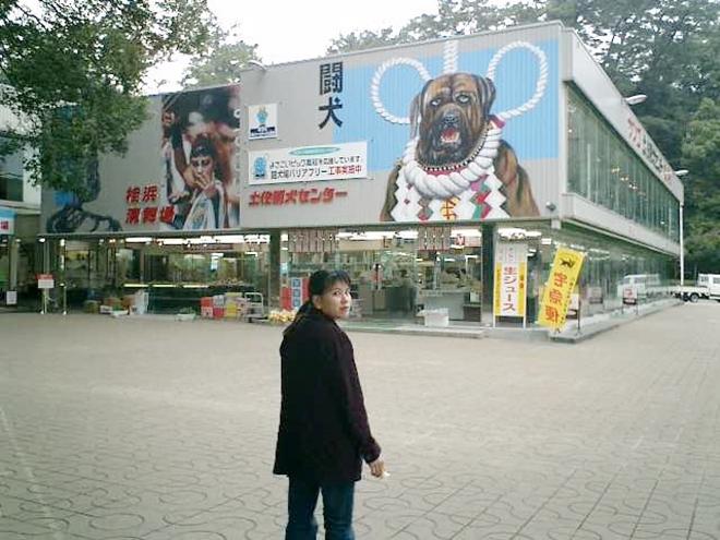 高知市内、浦戸桂浜「土佐闘犬センター」