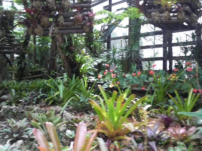 名護 ナゴパイナップルパーク園内の植物