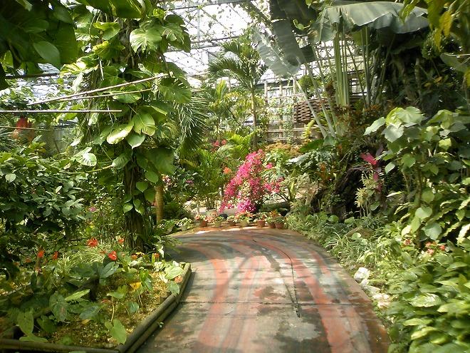 名護 ナゴパイナップルパーク内の植物園