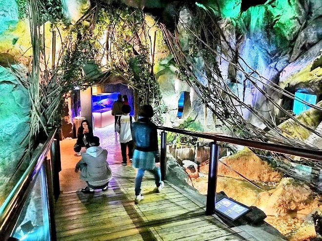 韓国、ソウル。ディスカバーソウルパスの旅-Coexアクアリウム