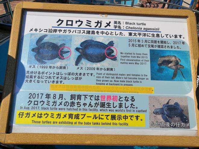 沖縄海洋博公園・ウミガメ館
