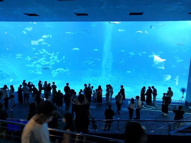 沖縄美ら海水族館 メイン水槽「黒潮の海」