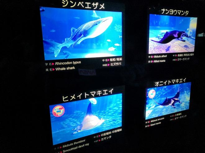 沖縄美ら海水族館「黒潮の海」の生き物の解説ボード