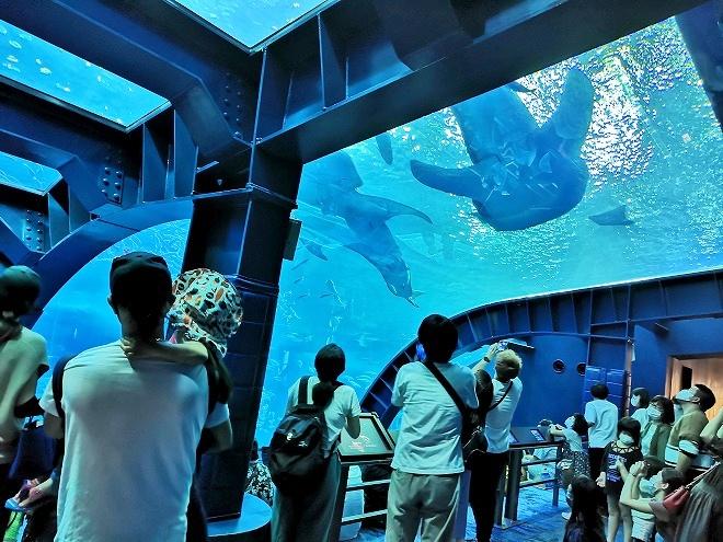 沖縄美ら海水族館「アクアルーム」