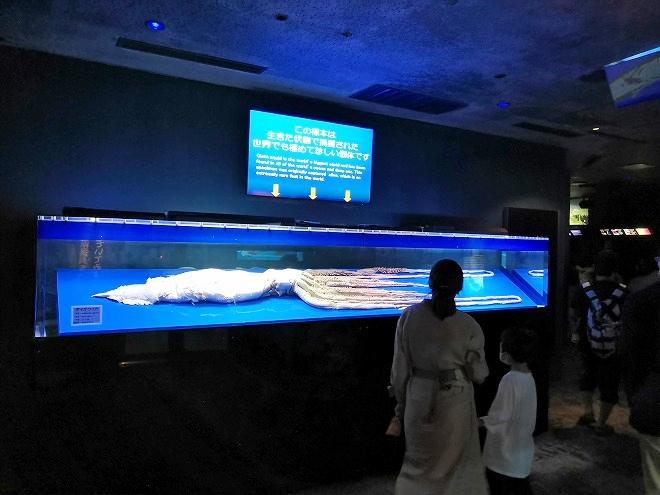 沖縄美ら海水族館「深層の海」のダイオウイカ