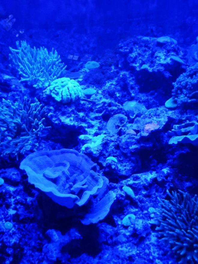 沖縄美ら海水族館「海のプラネタリウム」