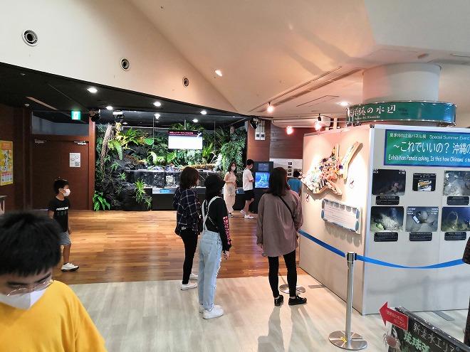 沖縄美ら海水族館 出口の小さなコーナー
