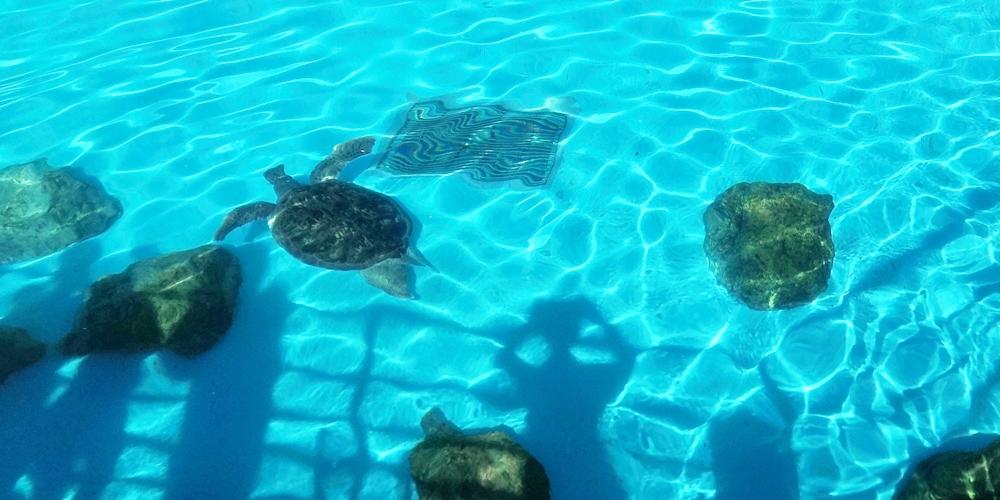 沖縄海洋博公園「ウミガメ館」