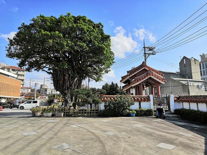 那覇市首里 慈眼院(首里観音堂)慈眼院の大きなガジュマルの樹