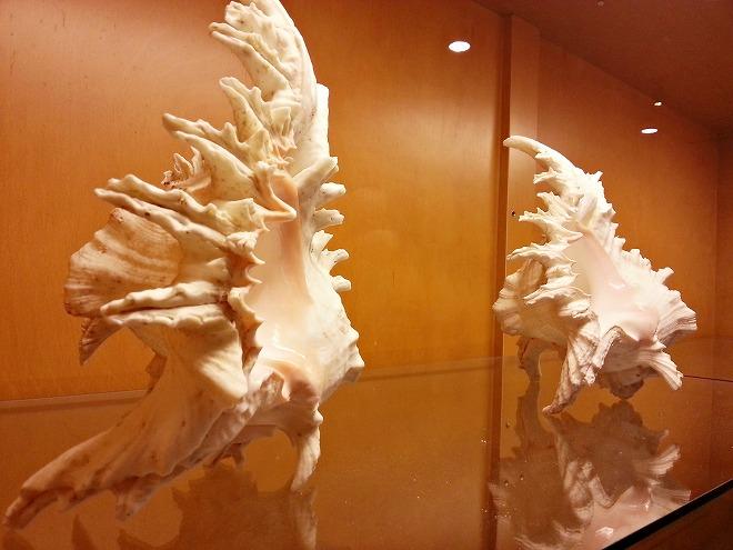 沖縄県名護市 ナゴパイナップルパーク 珍しい貝殻などの展示コーナー